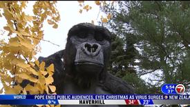 Marblehead Gorilla - October 30, 2020