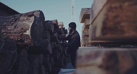 Proyecto WoodBases 🌲