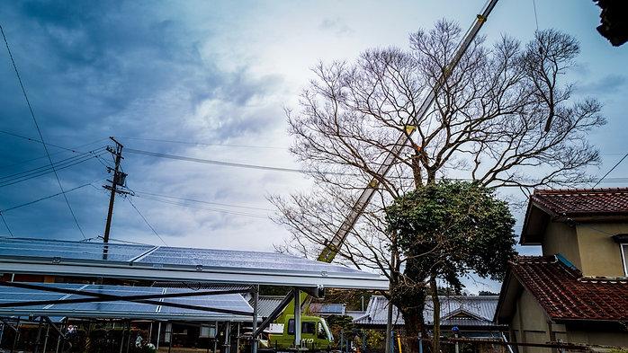 三重県四日市市にて榎の木伐採作業事例