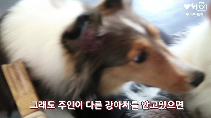 펫마인드캠 모델 샤샤 소개