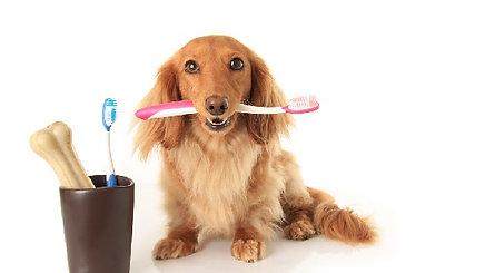 אתם מצחצחים שיניים כל בוקר? למה לא לחיית המחמד שלכם