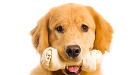 מחלות חניכיים ושיניים בחיות מחמד, איך מתמודדים איתם