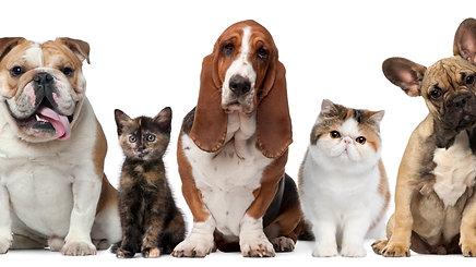 יותר מושלם, יותר בטוח, יותר מאוזן, כך צריך להיות המזון של חיית המחמד שלך