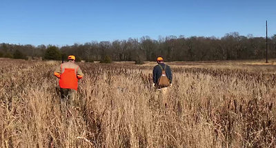 1/2 Day Quail Hunt