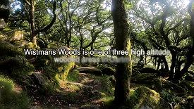 Wistmans Woods