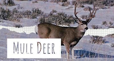 Wildlife with Jason Nixon