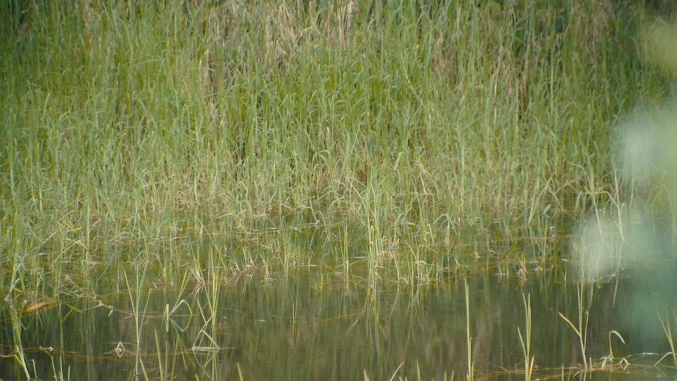 Aluna - English Trailer - Water V04
