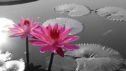 Modified Metta Meditation with HEAL method - meditation class 6-23-2020