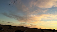 Morning Ducks