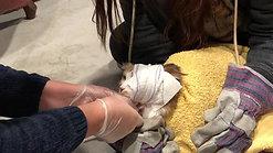 Un petit bandage félin
