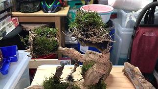 Creating a bonsai tree Part 2