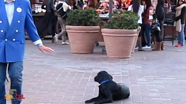 Award Winning & Governor Honored Dog Trainer