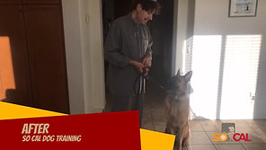 Award Winning & Governor Honored Dog Trainer