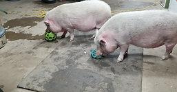 Lettuce Treats