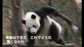百烈パンダ
