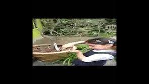 Y1 Plants (Video 1) - Shanae