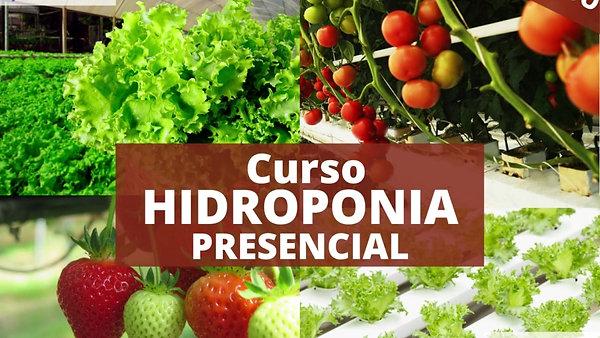 Curso Hidroponia Presencial