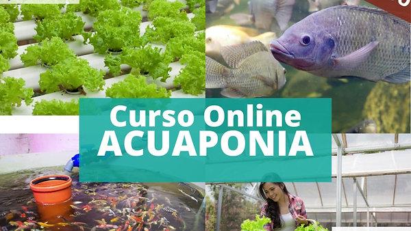 Curso  Acuaponia Online