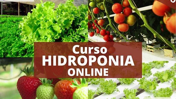 Curso Hidroponia Online