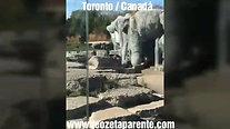 Suany Sales Zoológico de Toronto