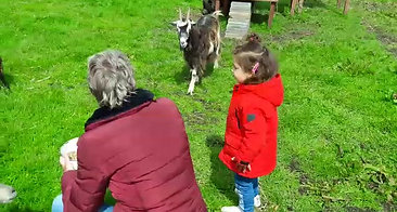 Het voeren van de geiten