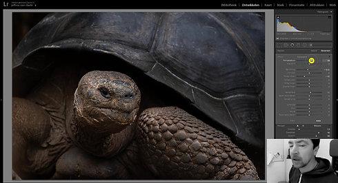 Bewerking Schildpad