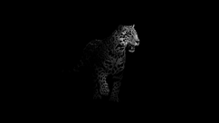 Documentary | Jaguars