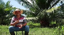 Guapalma
