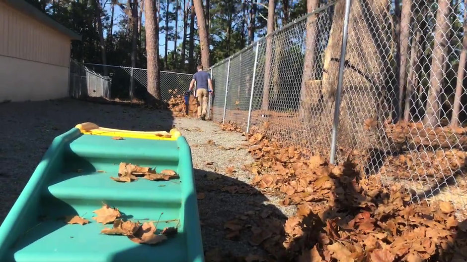 Doggie daycare at Pinehurst Animal Hospital in Southern Pines NC