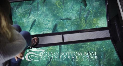 Glass Bottom Boat - Whitianga