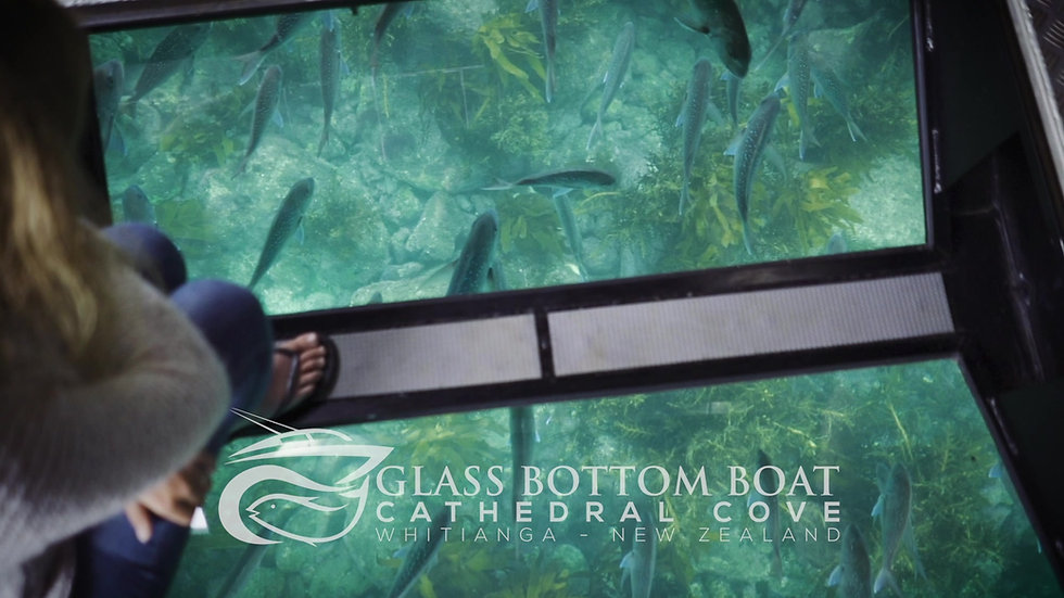 Glass Bottom Boat - Whitianga