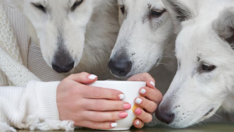 Как воспитать собаку-компаньона