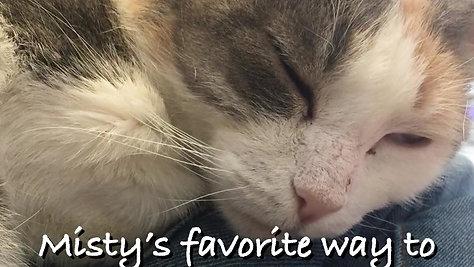Misty Adoption Video