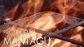 Protea Farm Tractor Trip Montagu