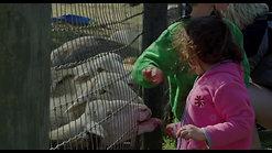 Animal Film Festival Trailer 2019