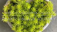 Bhakti Vinyasa Journey - W5 Anahata Chakra