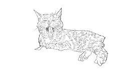 Cat Rotoscope