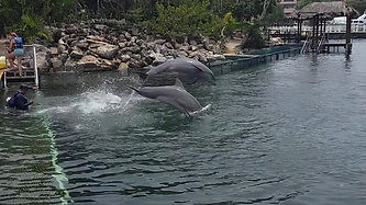 Check out the dolphins and other sea life in the Marina at Casa Dragonfly Riviera Maya