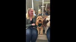 Dog-Friendly Restaurants - Tartine