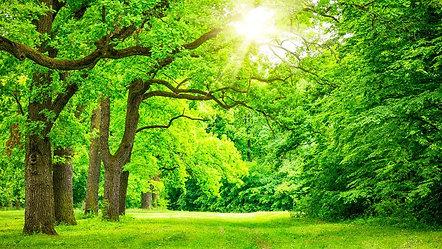 オーガニック望診断講座・木のエネルギー
