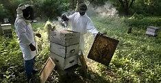 Croix des Bouquets      j-c SIMA apiculteur