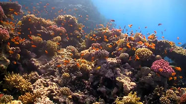 MOVIE Reef Fish Coral Farm