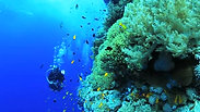 Movie Reef Life Assessment Team