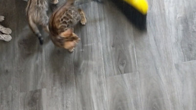 kittens v broom