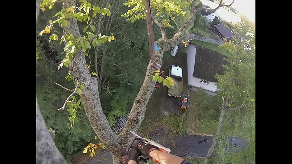 Tree Removal in Inverness.