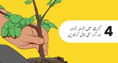 درخت لگانے کا طریقہ