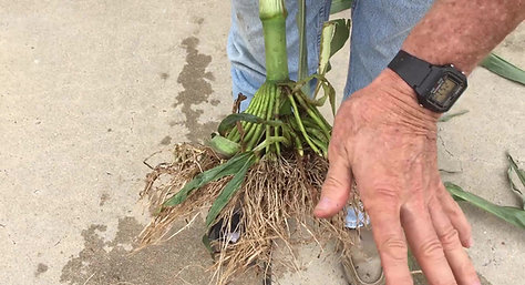 Improved Root development with STP Blades