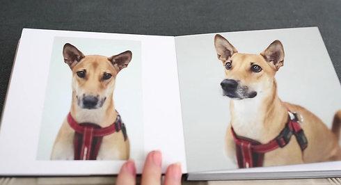 Pet Impressions Album