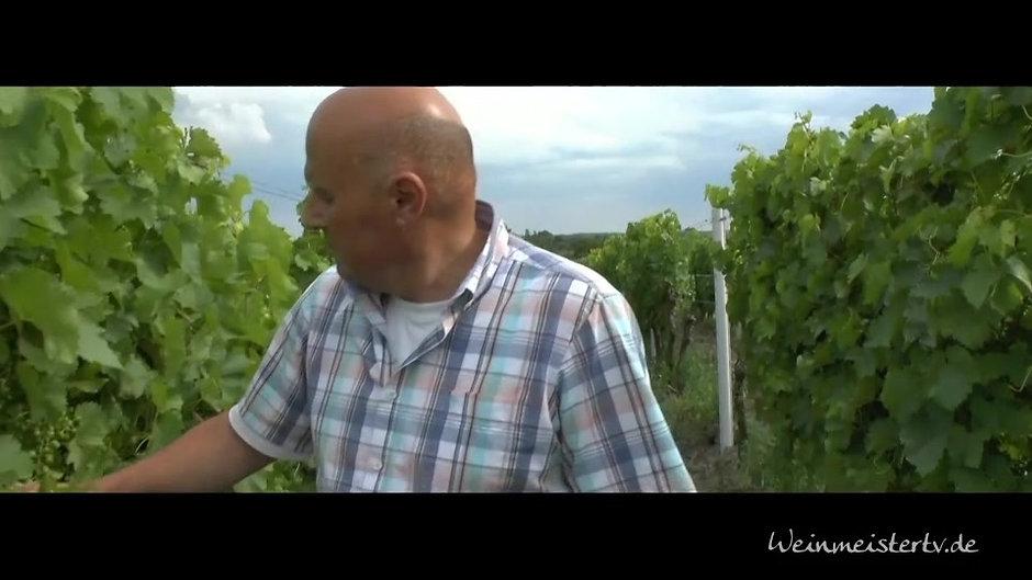 Weingut BIBINGER | Videos