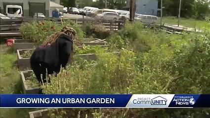WTAE Listens- Growing an Urban Garden